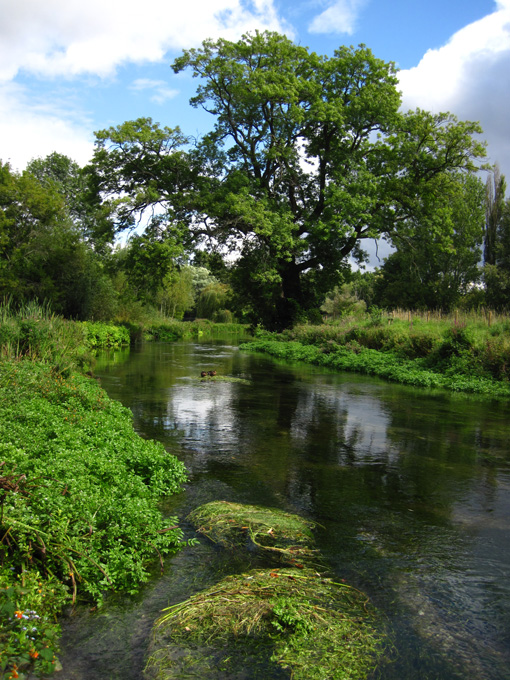 Itchen Abbots Worthy 2011